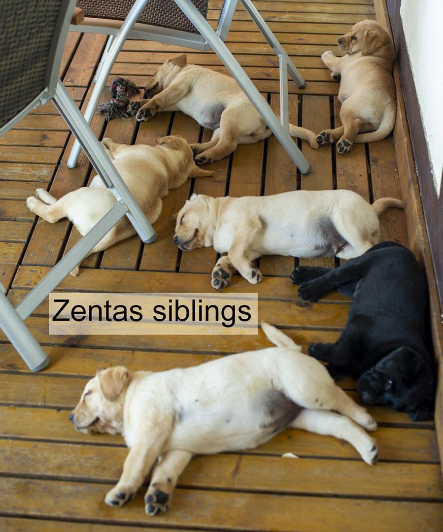 20140802 Zenta 011 (1)