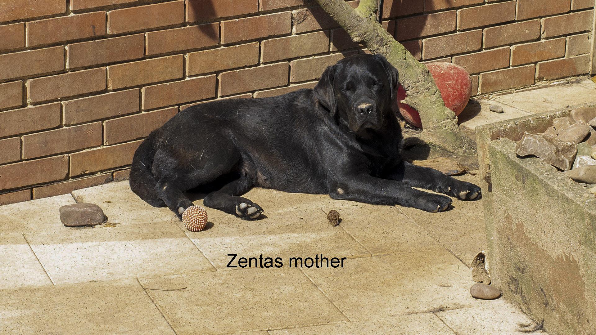 20140802 Zenta 031 (1) (1)