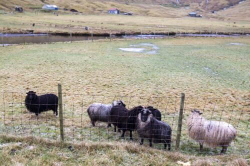 20191116 Færøer 142